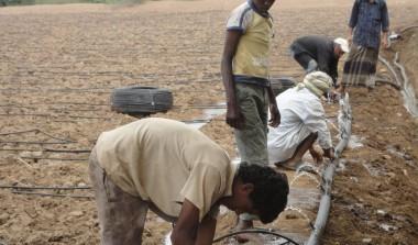 تركيب وصيانةوتشغيل أنظمة الري- الحجيلة-الحديدة-مشروع الزراعة المطرية (306)